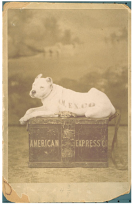 AmericanExpress_Watchdog